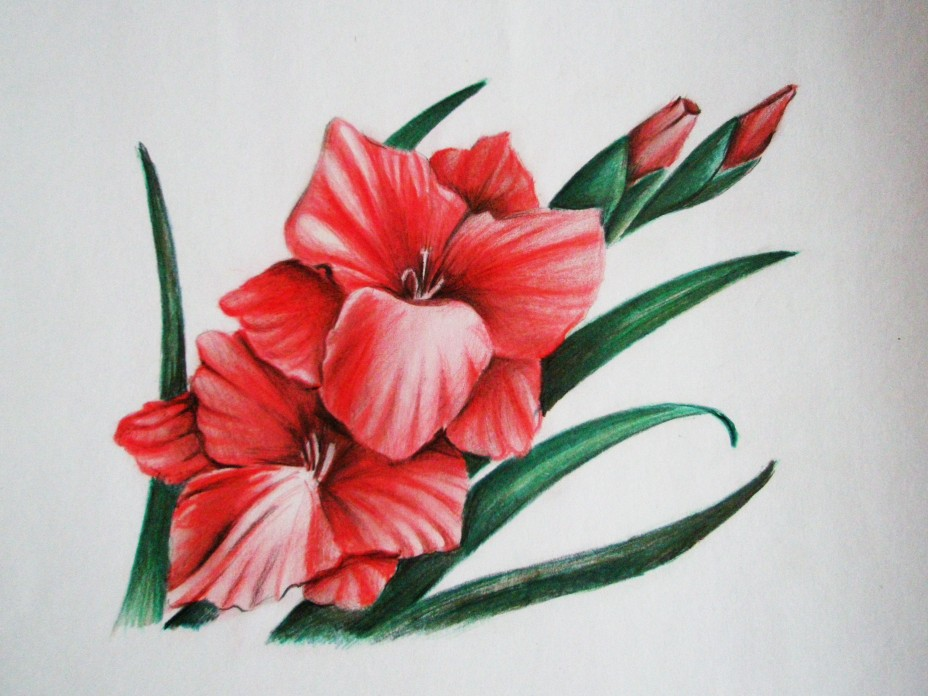 Картинки для срисовки цветными карандашами