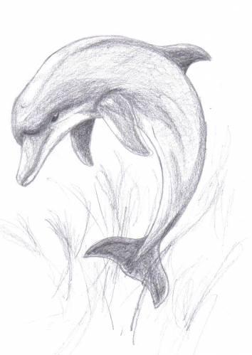 Акулы картинки для срисовки