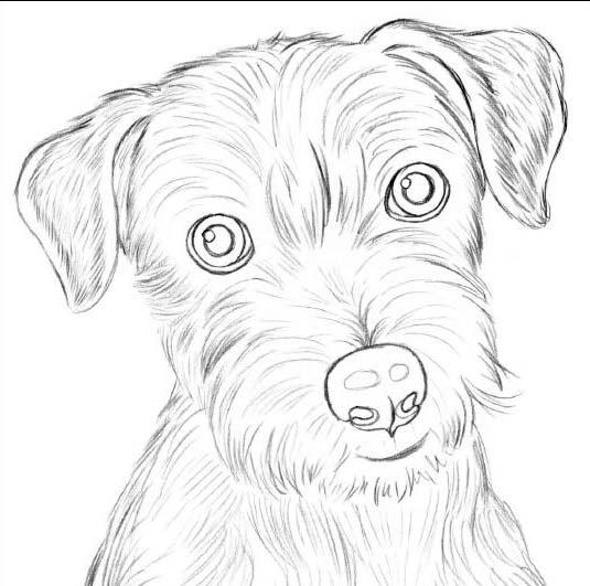 Рисунки собак для срисовки (30 картинок) - новый год 2018 Милый Щенок Хаски