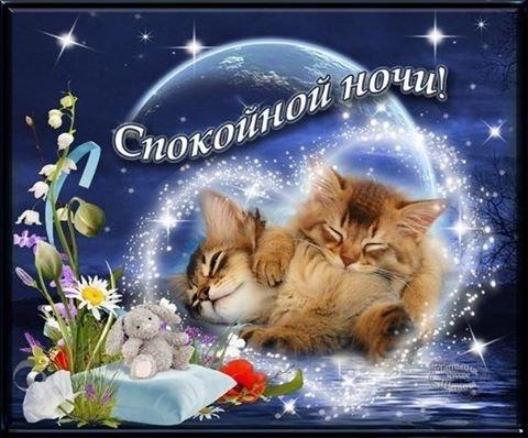 спокойной ночи прикольные картинки с надписями