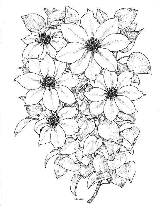 Картинки для срисовки цветы цветные рисунки и карандашом