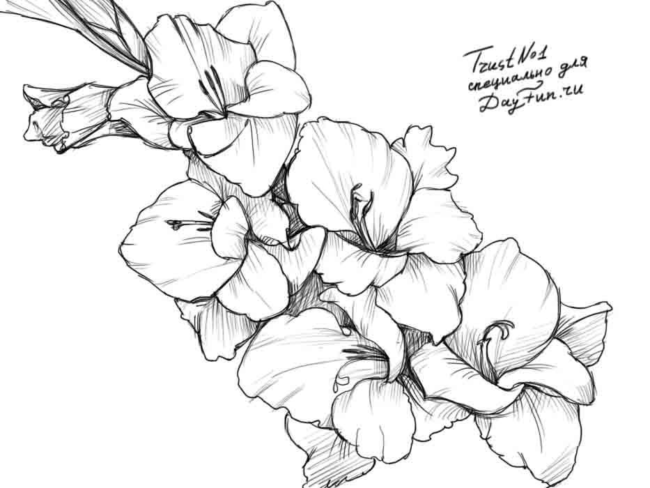 Drawing Lines In Jpanel : Картинки для срисовки цветы цветные рисунки и карандашом