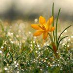 Доброе утро весна — Красивые весенние картинки